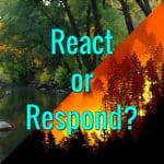 React or Respond?